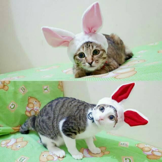 Jual Topi Kelinci Untuk Kucing Dan Anjing Kostum Kucing Lucu Baju Kucing Ak Jakarta Barat Belanjaayuuk Tokopedia