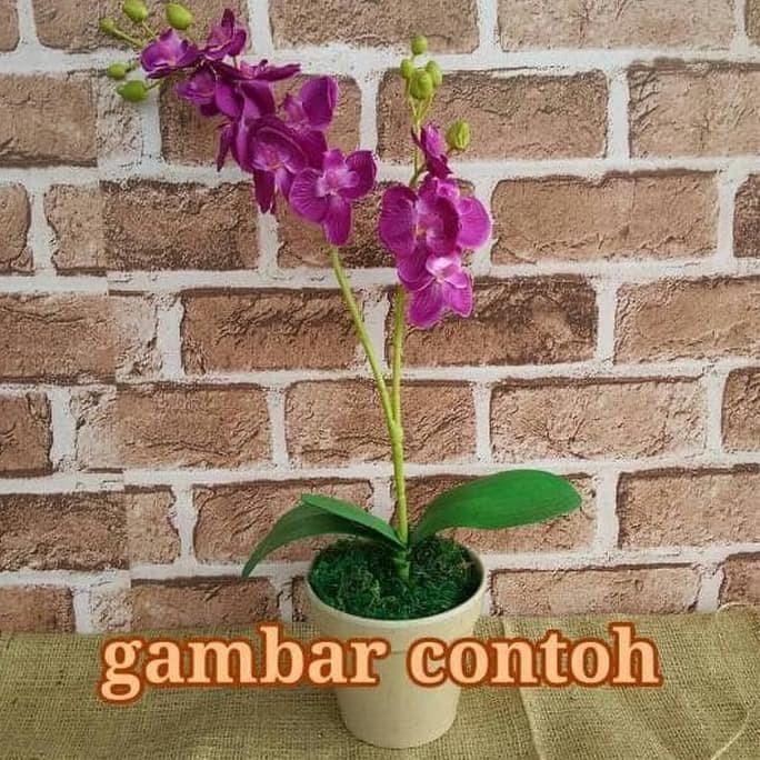 Jual Hot Sale Bunga Anggrek Tanaman Artificial Dekorasi Terjarmin Jakarta Barat Nurkinohop Tokopedia