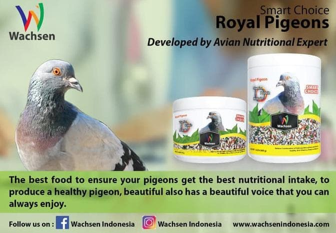 Jual Makanan Burung Dara Smart Choice Royal Pigeon Jakarta Barat
