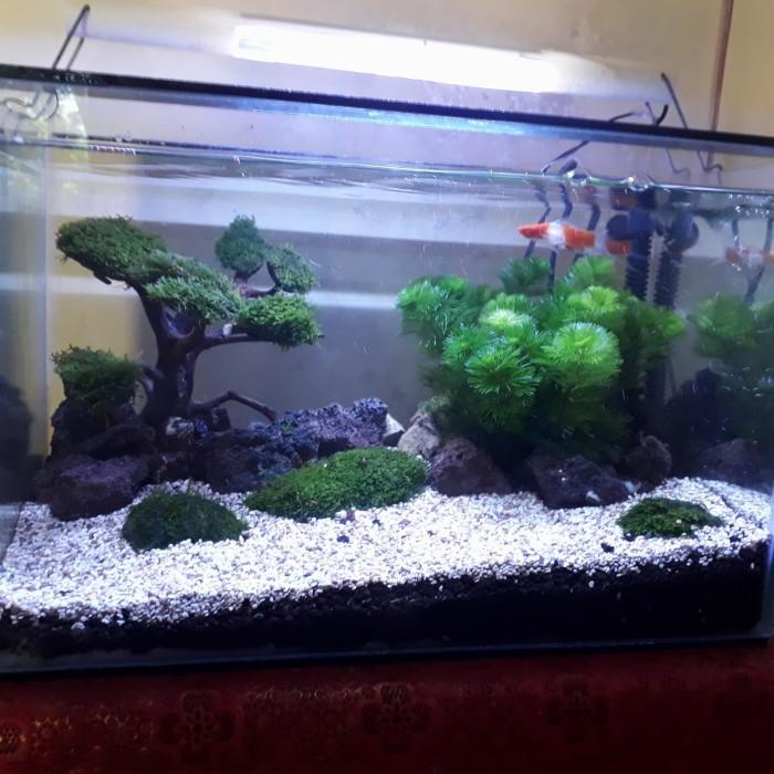 Jual Aquascape 40x30x30 Kab Bogor Fawaz Aquarium Tokopedia