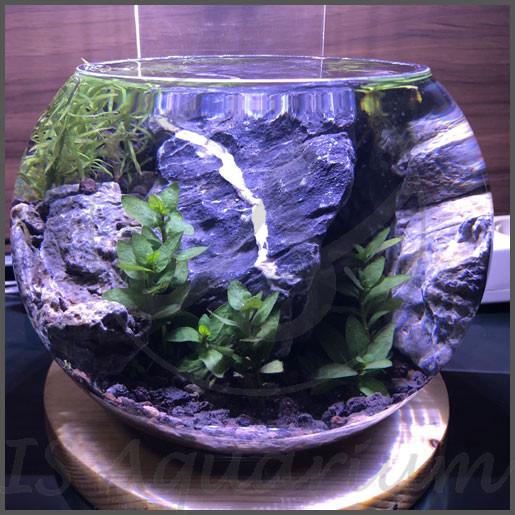 Jual Lampu Walstad Led Lampu Aquascape Lampu Led Aquarium Bulat Bowl Dki Jakarta Is Aquarium Tokopedia