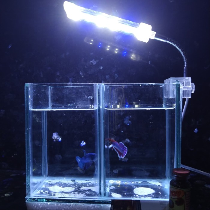 Jual Aquarium Ikan Cupang 1 Sekat Dengan Led Jepit Jakarta Timur Toko Makmak Tokopedia
