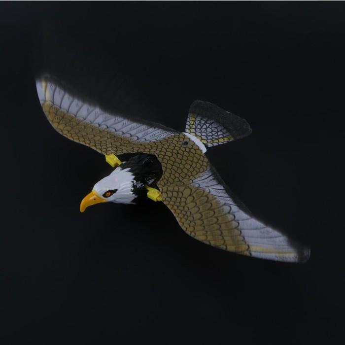 77 Download Gambar Burung Elang Terbang Terbaik