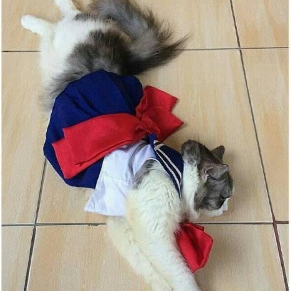 Jual Termurah Dress Sailormoon Untuk Kucing Dan Anjing Baju Kucing Lucu Jakarta Pusat Justins Tokopedia