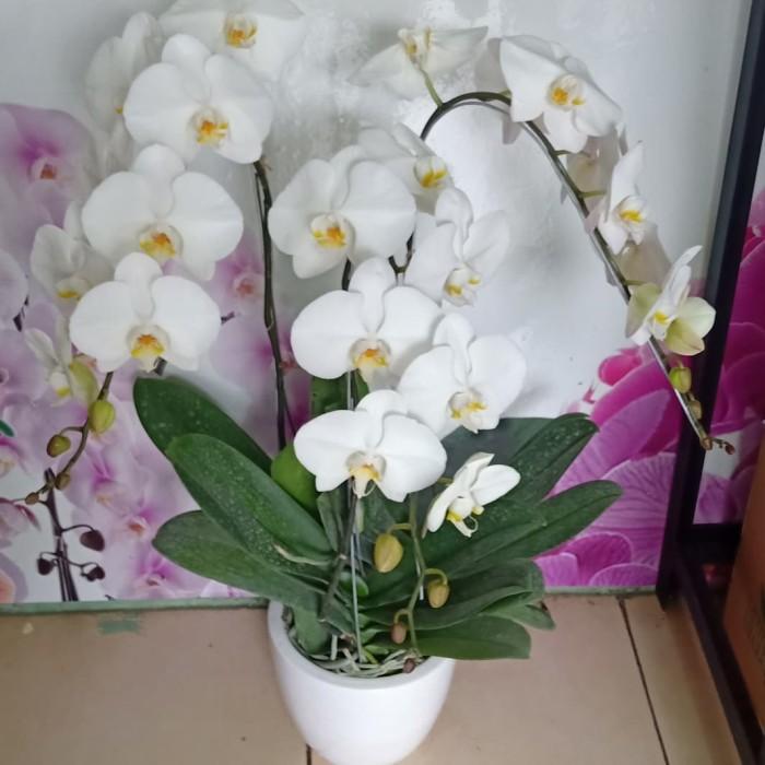 Jual Rangkaian Bunga Anggrek Bulan Buket Bunga Ungu Jakarta Barat Nia Florist Tokopedia