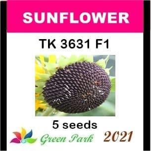 Jual Benih Biji Bunga Matahari Sunflower Tk 3631 F1 Pack Gp Kuaci Kwaci Kab Sidoarjo Eph Zee Tokopedia