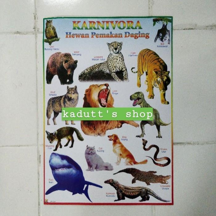Jual Poster Edukasi Binatang Karnivora Hewan Pemakan Daging Mainan Murah Jakarta Barat Kadutt S Shop Tokopedia