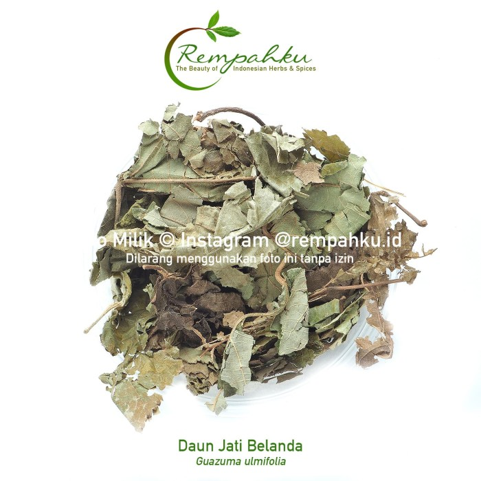 Foto Produk Rempahku - Daun JATI BELANDA 1kg Teh Diet Herbal Kurus Slimming Tea dari Toko Rempah Indonesiaku