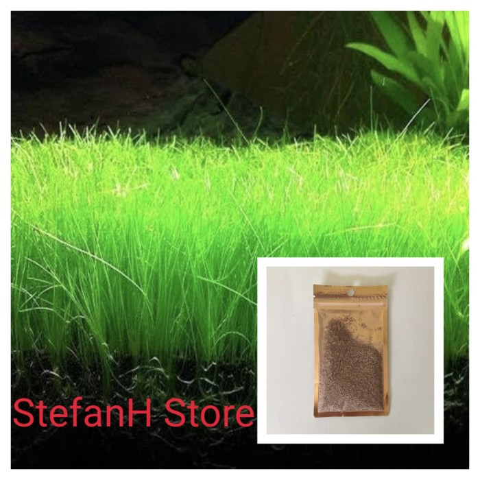 Jual Carpet Seed Hair Grass Bibit Tanaman Aquascape 20 Ml Kota Depok Stefanh Store Tokopedia