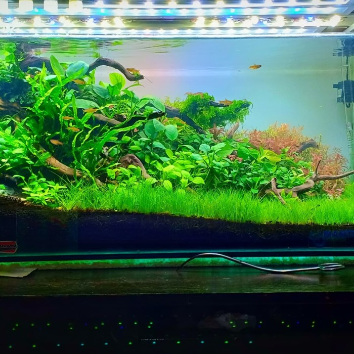 Aquascape Ideas Aquascape Design Jakarta