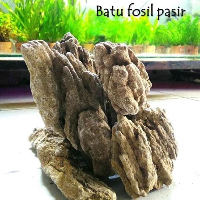 Jual batu aquascape batu fosil pasir grade A 1kg - Kota ...