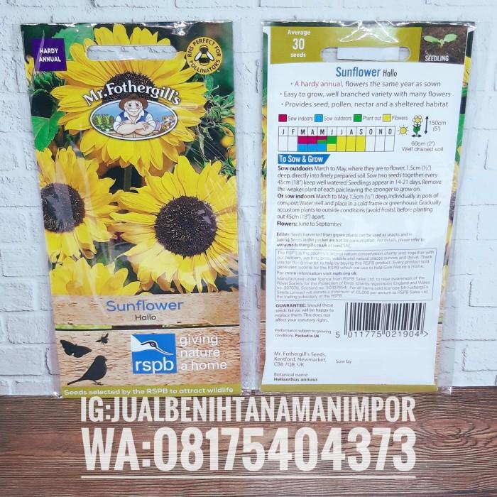 Jual Benih Biji Bunga Matahari Sunflower Hallo Mr Fothergills Asli Kota Malang Jual Benih Tanaman Tokopedia