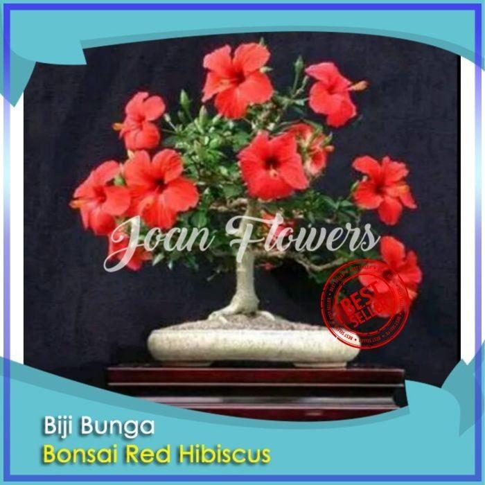Jual Bibit Tanaman Bunga Bonsai Red Hibiscus Kembang Sepatu Benih Tanaman Kota Kediri Bibit Bunga Impor Tokopedia