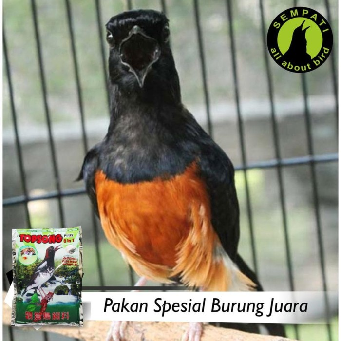 Jual Topsong Rumput Laut 3 In 1 Plus Pakan Burung Kacer Anis Kembang Murai Jakarta Timur Bihanhan Tokopedia