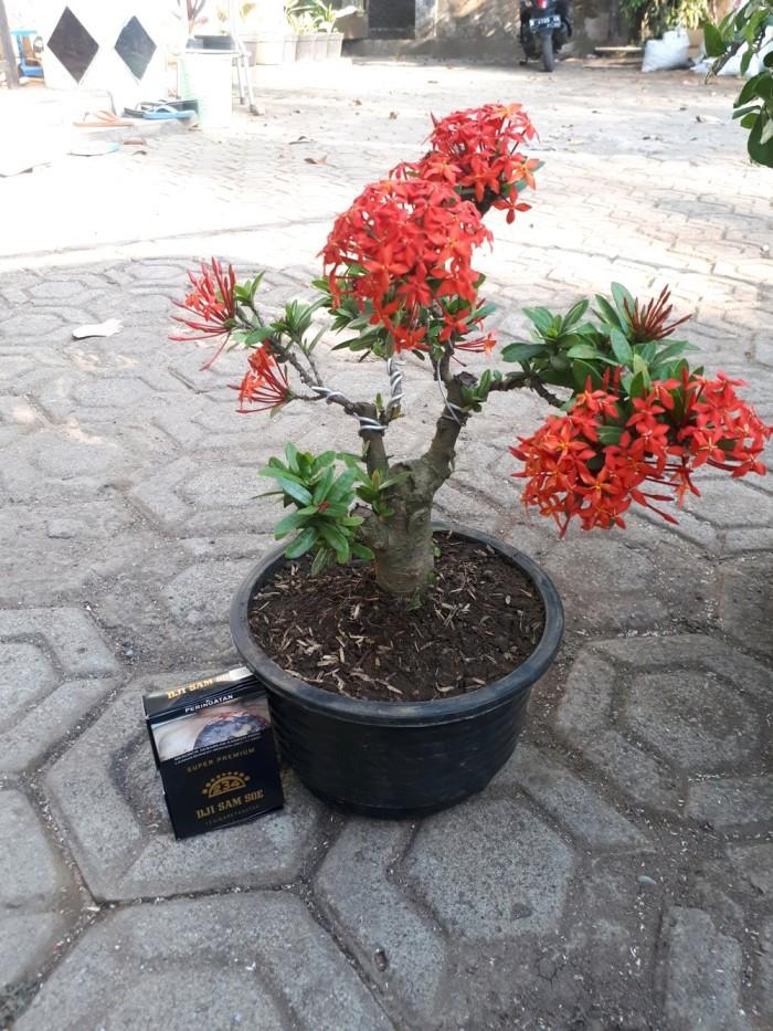 Jual Bahan Bonsai Bunga Asoka Bagus Cantik Harga Murah Kota Semarang Rifqi Irga Gustriawan Tokopedia