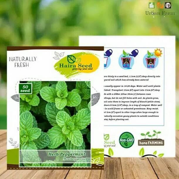 Foto Produk Benih / Bibit Herba Peppermint / Tanaman Daun Mentol / Daun Mint dari look_at_me!