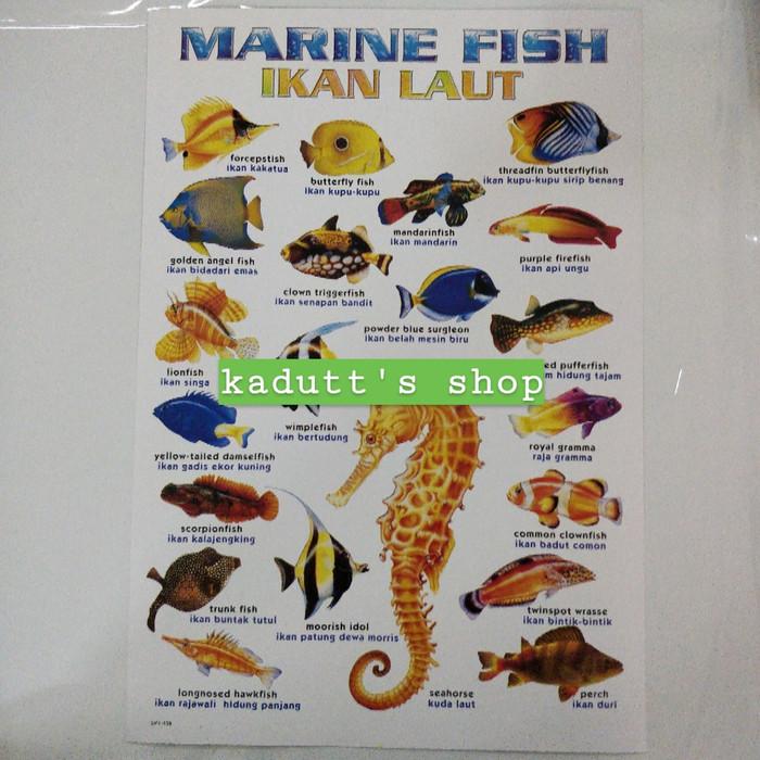 44++ Jenis hewan hewan laut terbaru