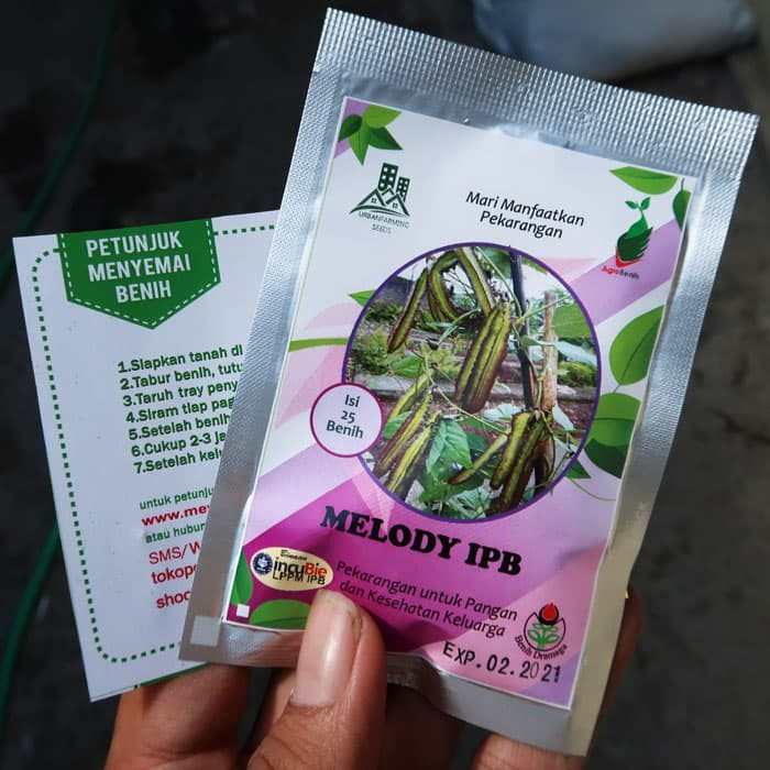 Foto Produk Kecipir Ungu Melody IPB 25biji dari mewalik-jaya