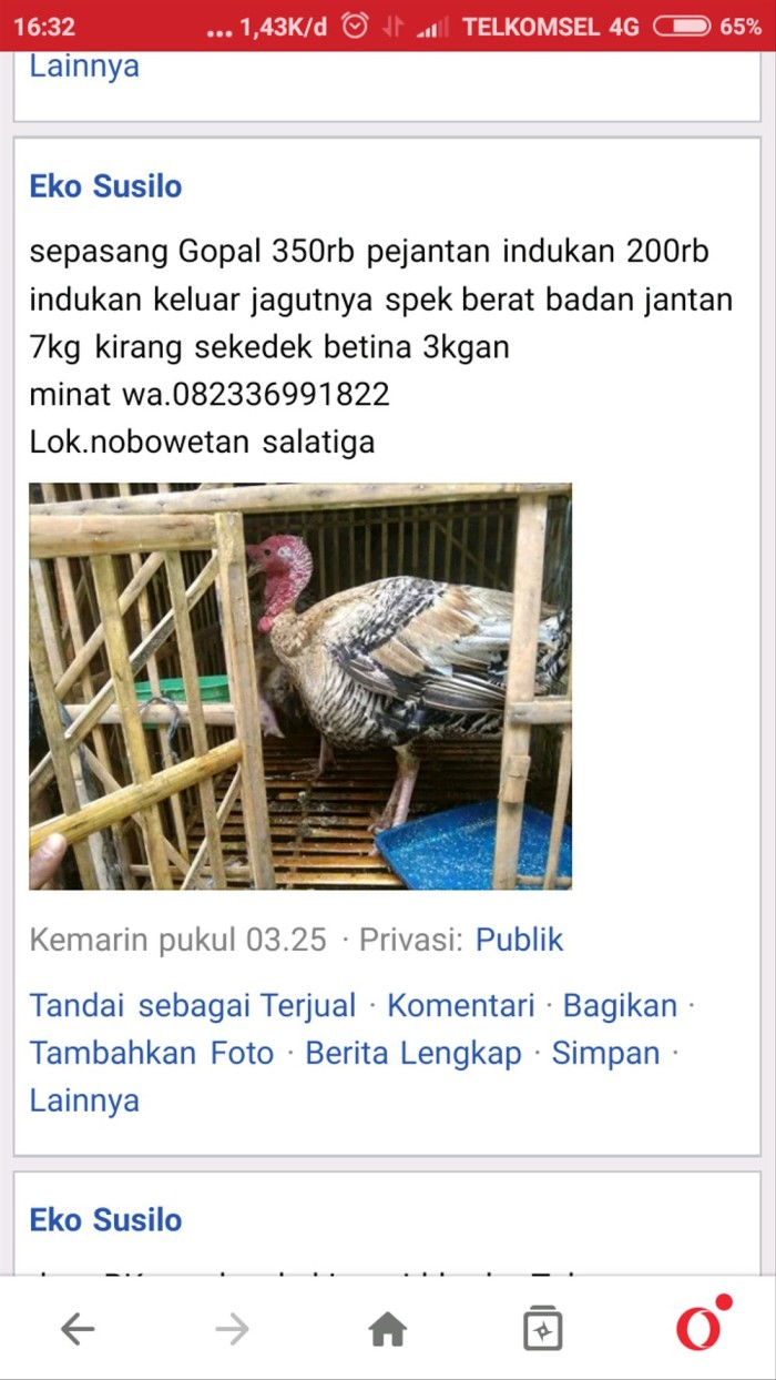 Jual Karkas Kalkun Jantan Tua Jakarta Barat Lucia Lubis Fatmawati