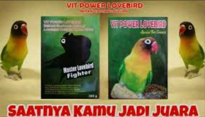 Jual Promo Master Lovebird Fighter Vit Power Lovebird Pakan Buru Jakarta Barat Jarotcindung Tokopedia