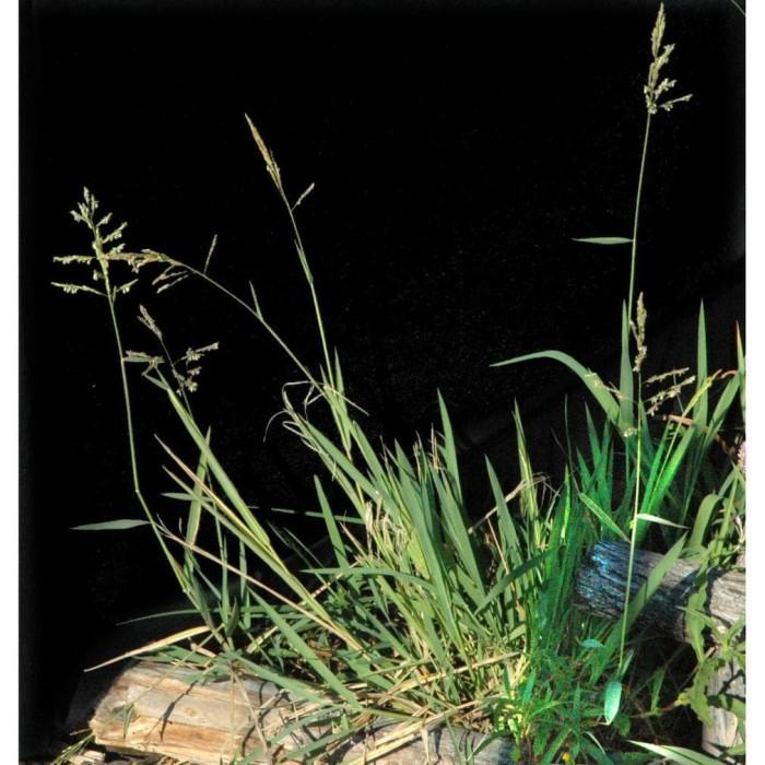 Jual Nominee 100 Of 250ml Herbisida Selektif Tanaman Padi Pembasmi Rumput Kota Batu Mistim Store Tokopedia