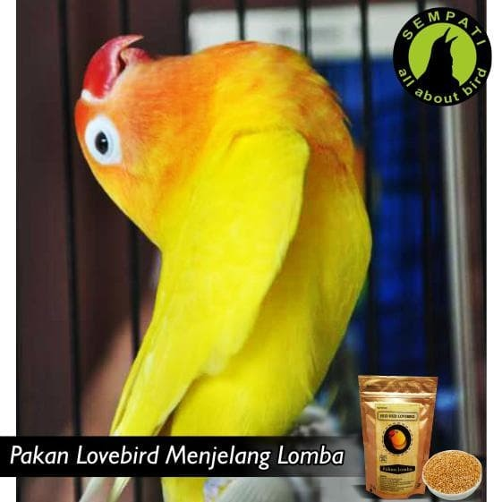 Jual Terbaru Dan Terlaris Hud Hud Lovebird Pakan Burung Lomba Juara Jakarta Barat Yasinnshop Tokopedia