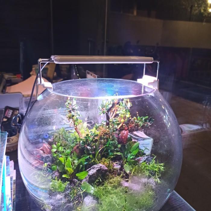 Jual Lampu Untuk Aquarium Bowl Koki Kota Bogor Asiaflona Tokopedia