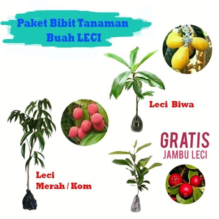 Foto Produk paket leci dari Barokah Florist Official