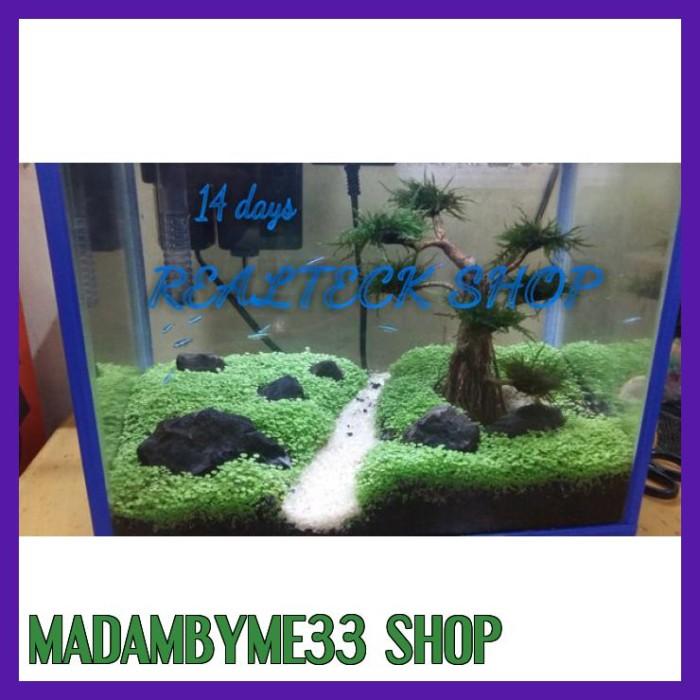 Jual Sale Carpet Seed Mini Dwarf Aquascape Tank 50 60cm Jakarta Selatan Madambyme33 Shop Tokopedia