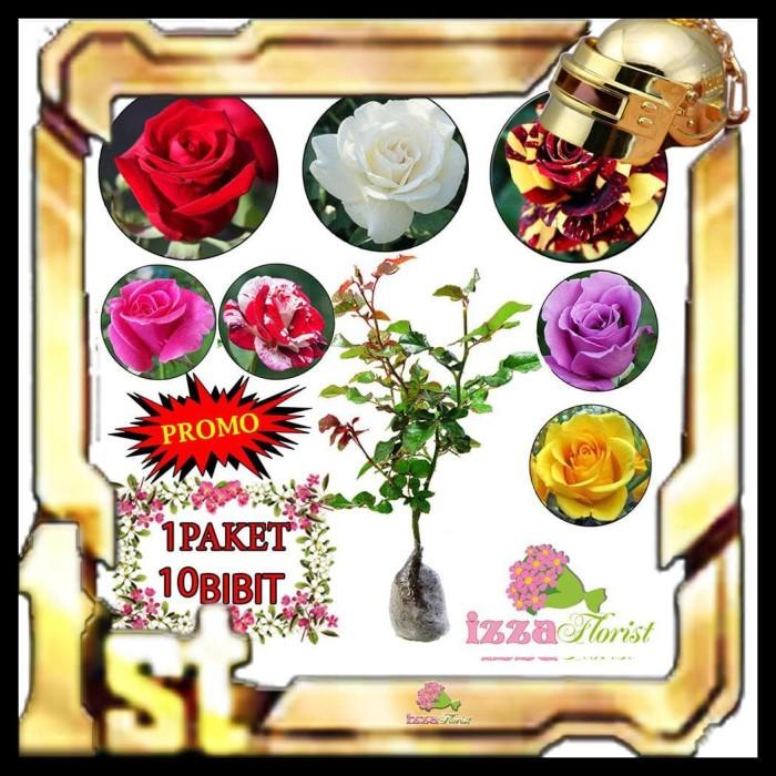 Foto Produk PRIVASI AMAN!!! BIBIT TANAMAN HIAS MAWAR 10 POHON/ 1 PAKET / 1KG KODE dari Setian-Store123