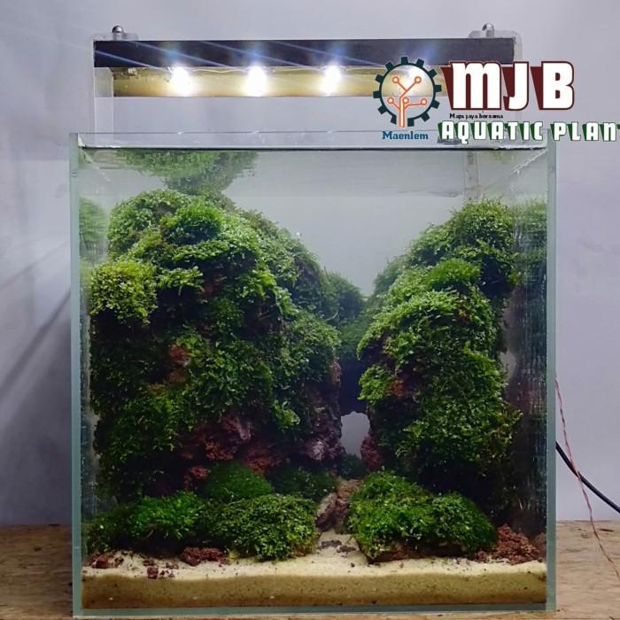 Jual Aquascape Mini Nano Tank 30x30x30cm Kota Depok Mjb Aquatic Plants Tokopedia