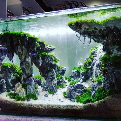 Jual Aquascape Tebing Air Terjun Kota Depok Hasanahh Shop Tokopedia