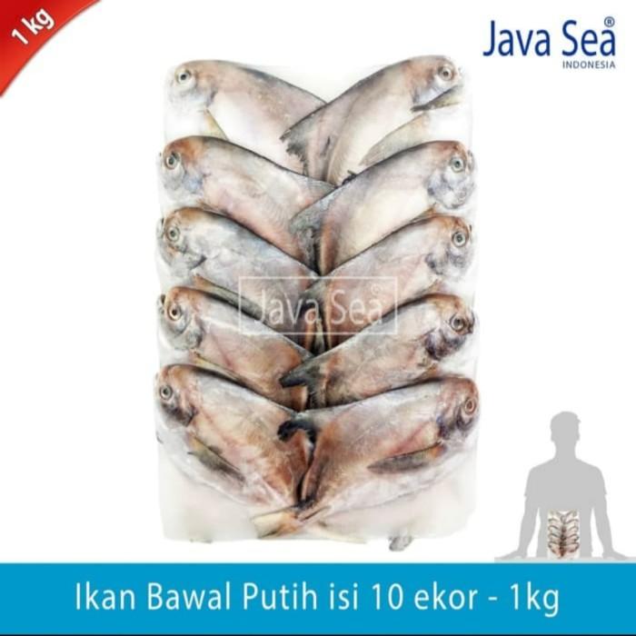Jual Java Sea Ikan Bawal Putih Isi 10 Ekor Jual Bawal Ikan Bawal Kota Bandung Java Sea Bandung Tokopedia