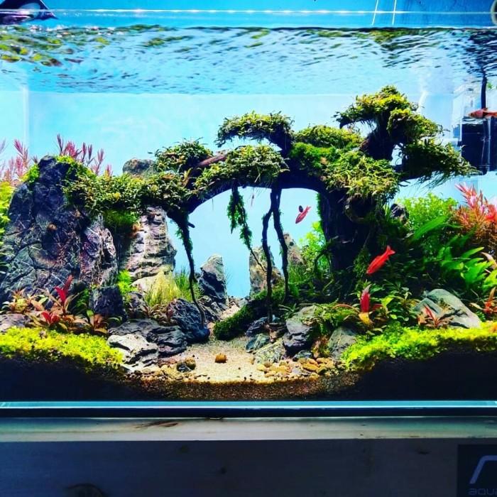 Jual Aquascape 60cm Optic Clear Jakarta Selatan Aquaraff Tokopedia