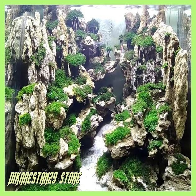 Jual Grosir Batu Aquascape Aquarium Batu Fosil Pasir 1 Kg Jakarta Barat Dikarestan29 Store Tokopedia