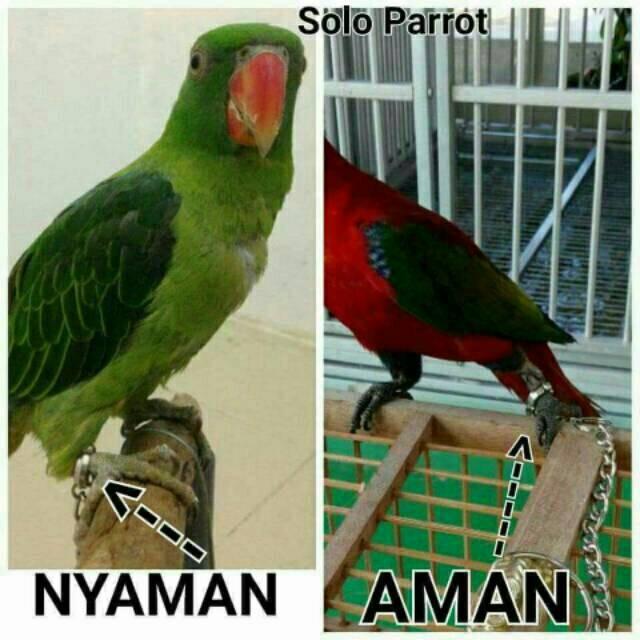 Jual Rantai Buat Burung Parrot Kaka Tua Macau Nuri Bayan Afgrey Sun Conure Jakarta Barat Abbastoko Tokopedia