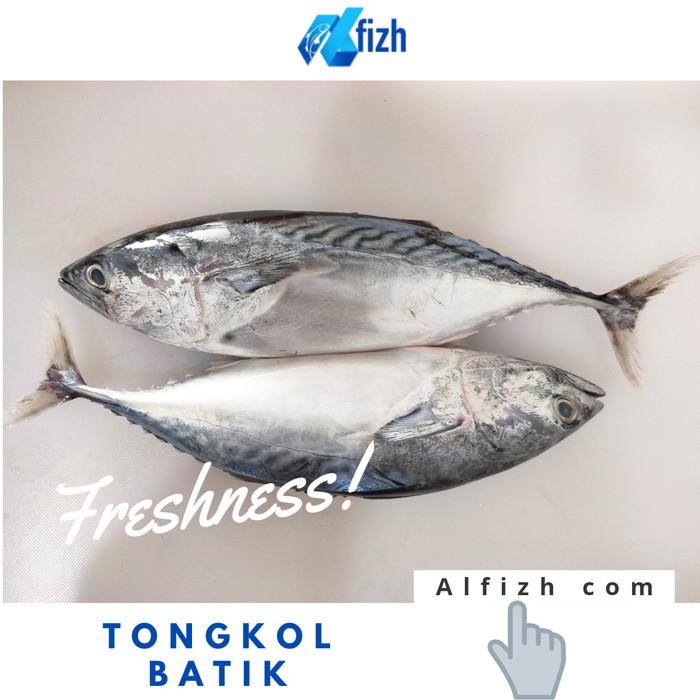 jual ikan tongkol batik jakarta selatan alfizh indonesia tokopedia jual ikan tongkol batik jakarta selatan alfizh indonesia tokopedia