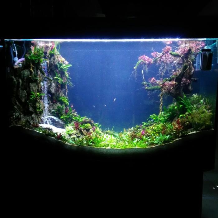 Jual Jasa Setting Aquascape Fullsett 100 120cm Jakarta Selatan Aquaraff Tokopedia