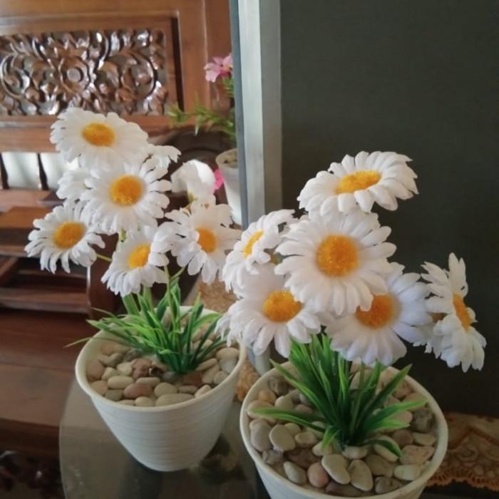 Jual Bunga Matahari Putih Kota Surakarta Erfabunga Tokopedia