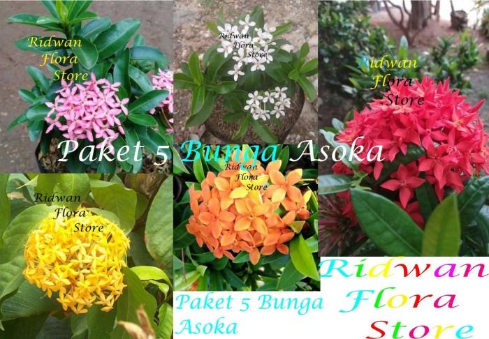 Jual Paket 5 Bunga Asoka Merah Putih Kuning Pink Orange Kab Bogor Hobbytamanlandscape Tokopedia