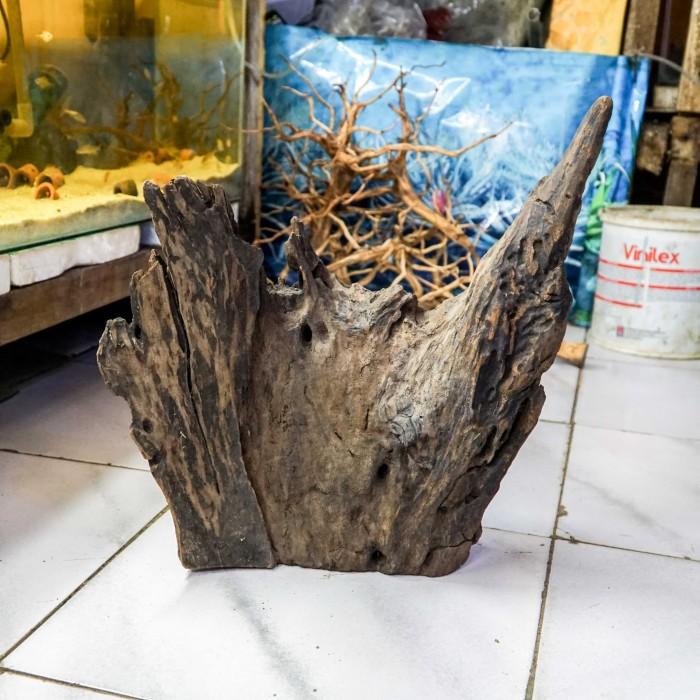 Jual Kayu Aquascape Ukuran Besar Kota Bogor Danis Aquarium Tokopedia