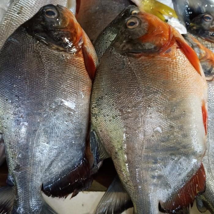 Tambak Jaya Fishing