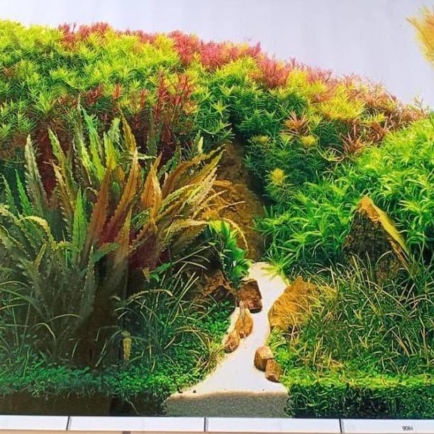 jual background gambar latar tanaman aquascape rumput hijau tinggi 50 cm jakarta barat sonii store tokopedia jual background gambar latar tanaman aquascape rumput hijau tinggi 50 cm jakarta barat sonii store tokopedia