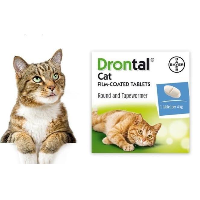 Jual Obat Cacing Kucing Drontal Cat Efektif Basmi Semua Cacing Jakarta Selatan Petnyaku Tokopedia