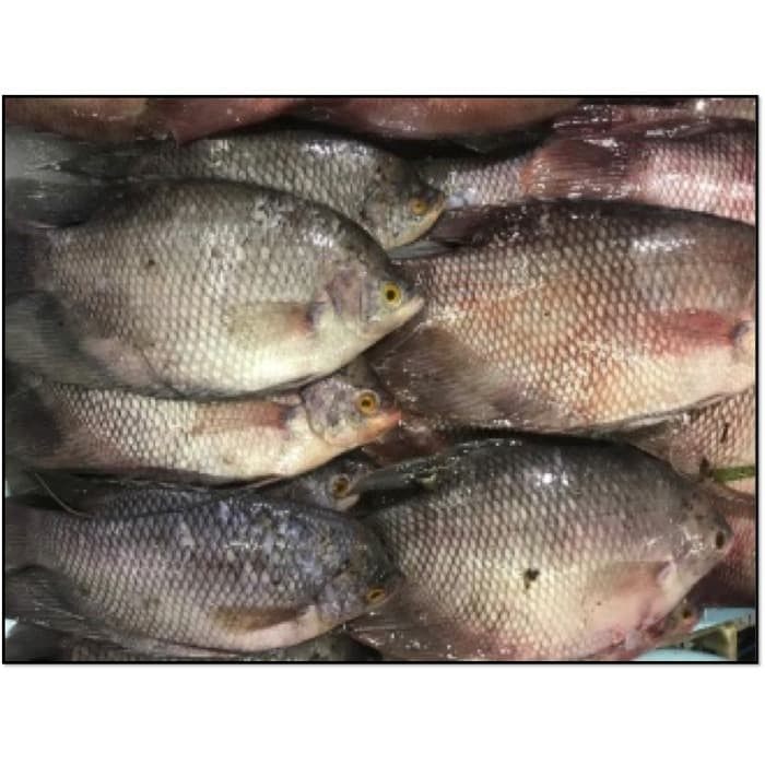 Jual Ikan Gurame Ibu Ulfa Per 500 Gr Kota Malang Pasar Besar Malang Tokopedia