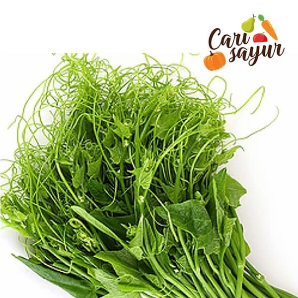 Foto Produk CARI SAYUR - Pucuk Labu [500 gram] dari CARISAYUR OFFICIAL