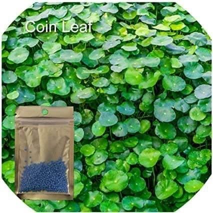 Jual Biji Benih Coin Leaf Grass Carpet Seed Aquascape Aquarium Plant Jakarta Selatan Dahlia Farm Tokopedia