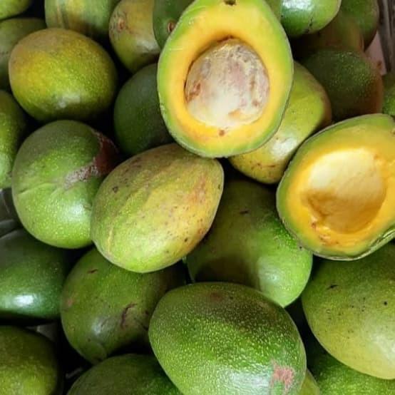 Foto Produk alpukat mentega - Sedang dari puji buah