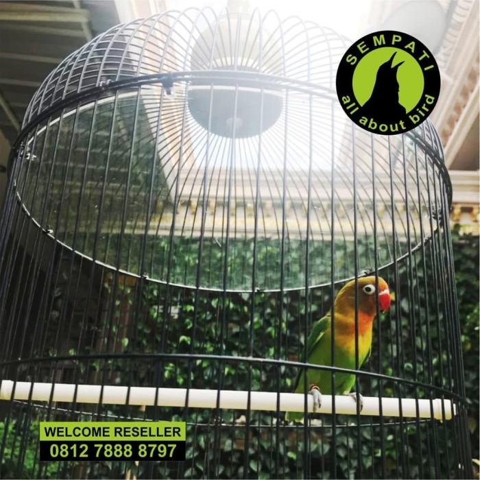 Foto Produk PLAFON ATAP AKRILIK SANGKAR BURUNG LOVEBIRD ANTI NAIK KEATAS SEMPATI dari Sempati Bird Shop