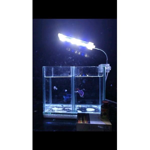 Jual Aquarium Sekat Mini Ikan Cupang Dengan Lampu Led Berkualitas Jakarta Pusat Fany Ardhani Tokopedia